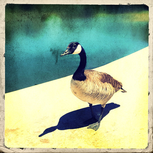 What's good for the goose, is good for the gander. | by GingerLucero