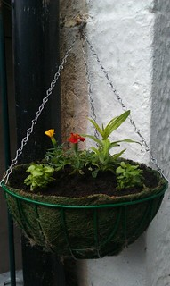 First hanging basket of the year, done. That means it's summer now, yes? | by Happyralph