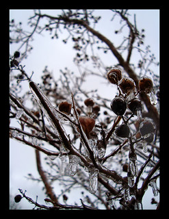 Frozen Berries II | by The Aberrant Eye