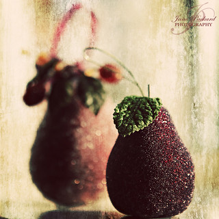 A pair of pears!! | by Jane P :-)