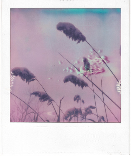 PX-70 PUSH! reeds. | by georgeweissthethird