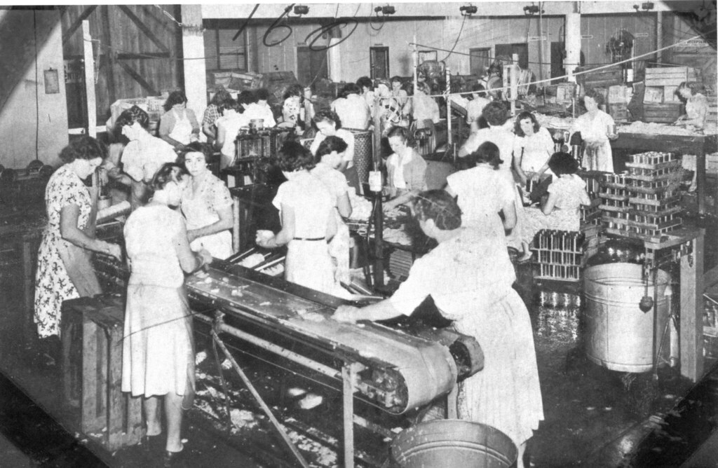 Women Working At Cairns Pineapple Canning Factory