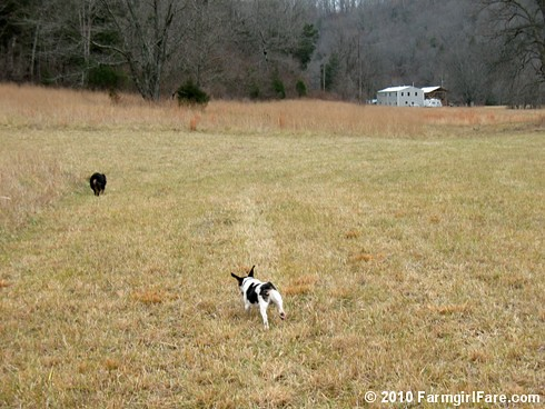 Flying into the new year | by Farmgirl Susan