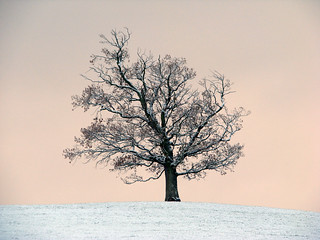 The Tree on the Hill | by Nikki-ann