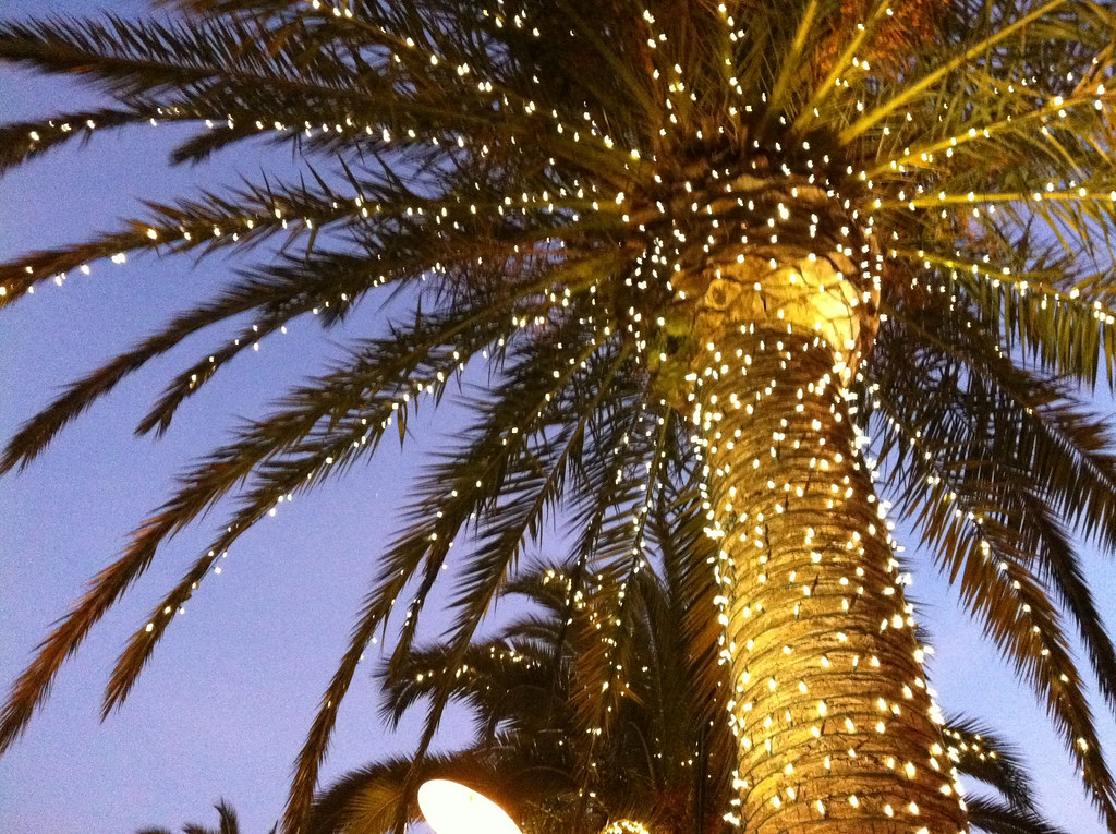 palm tree with christmas lights by jsuciu - Palm Tree With Christmas Lights
