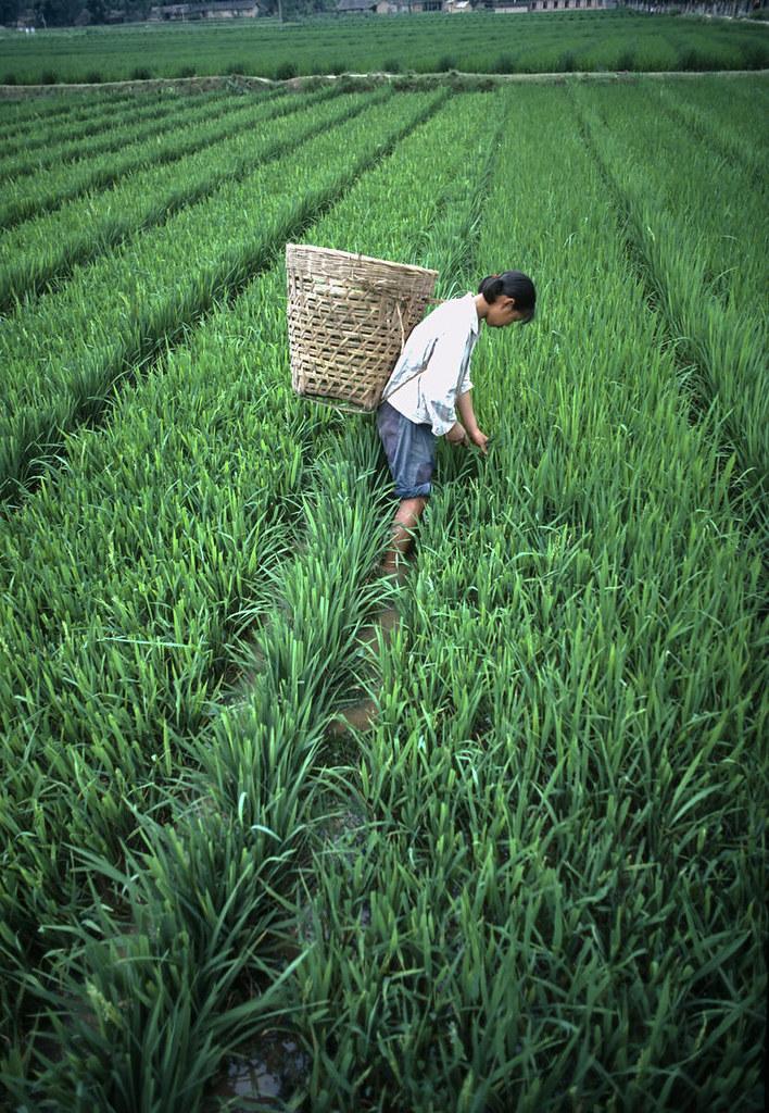 Kuvahaun tulos haulle farming china