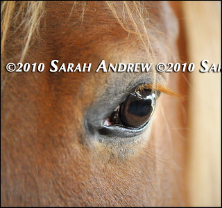 This week's available horses at Camelot Auction | by Rock and Racehorses