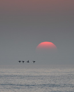 Sunrise with Birds | by Eve'sNature