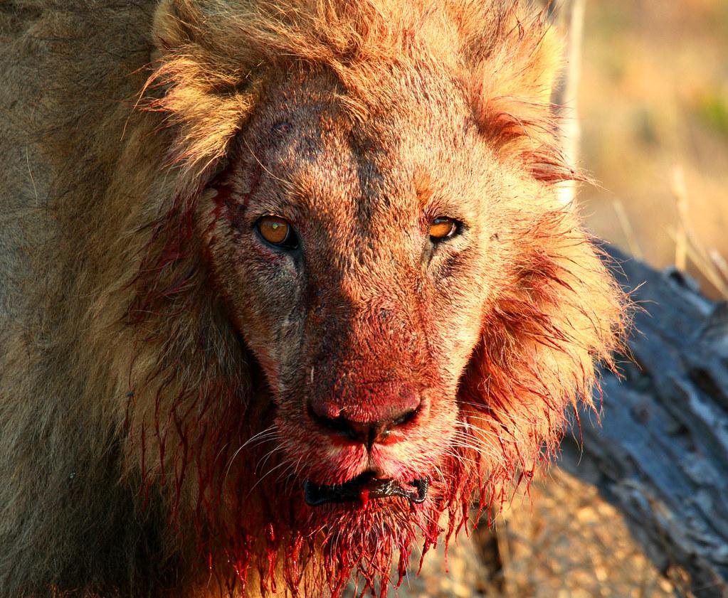 Zenfolio | Patrick O'Brien - Wildlife Photographer | The King of ...