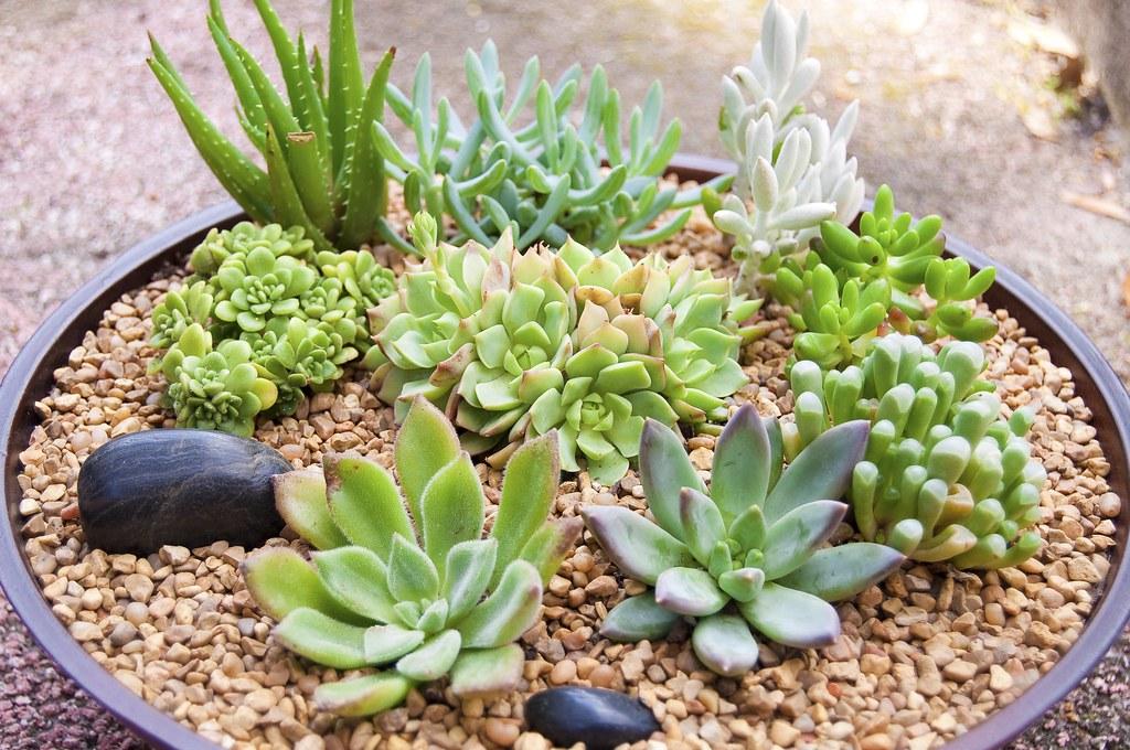 Merveilleux Succulent Dish Garden | By Donnaselph81 Succulent Dish Garden | By  Donnaselph81