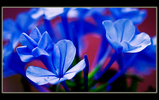 Blues | by Trevi2009-