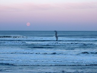 moonset gull | by pianomom2001