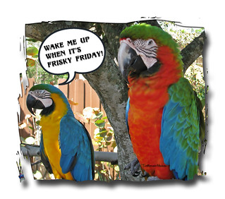 """The Real Macaws"" ~ Happy FRISKY Friday ~ 