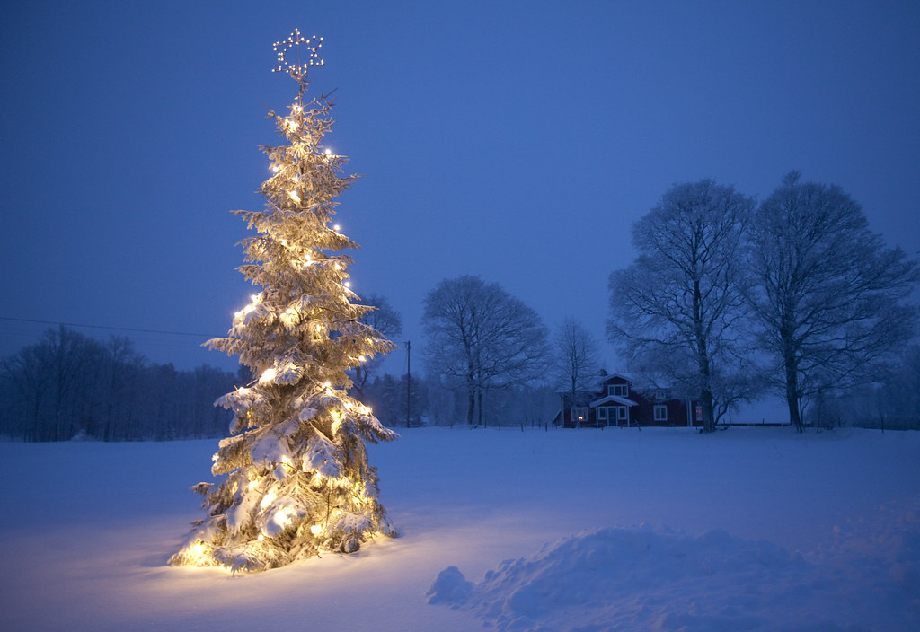 outdoor christmas tree | a winter image of christmas tree w … | Flickr
