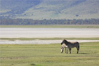 Ngorongoro Crater ( the crater floor) | by Hassaneini