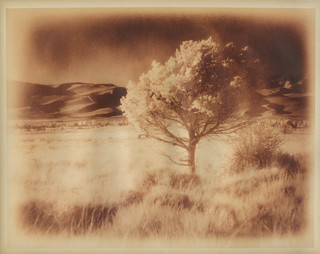 Tree and Dunes, lithed | by yarnzombie