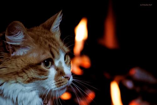 Il gatto inverno ai vetri della scuola stamattina l for Il gatto inverno