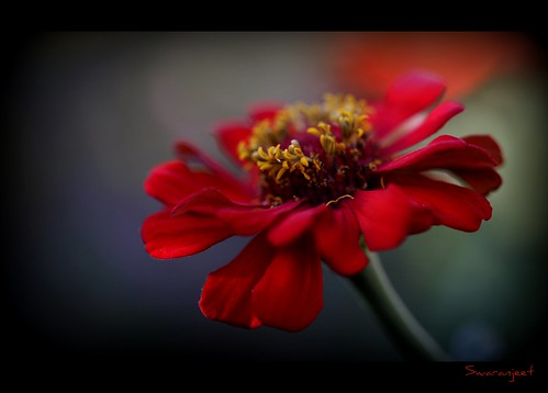 Blood Red ! - IMG_2542_2 | by Swaranjeet