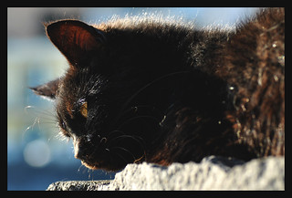 black_cat | by Puccalllina