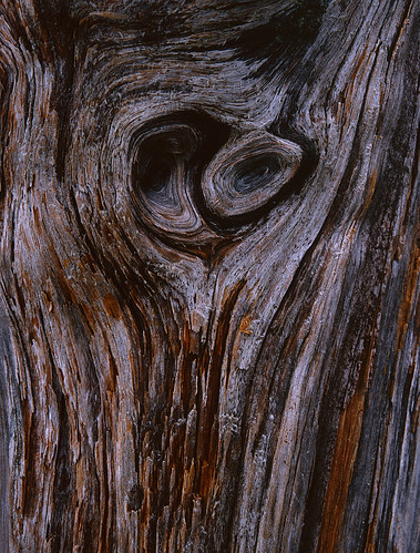 Wood Knot - Loch Maree - Beinn Eighe Reserve | by Issa Farhoud