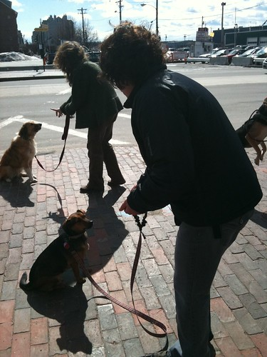 Group learning to sit/stay | by Dogwise Obedience