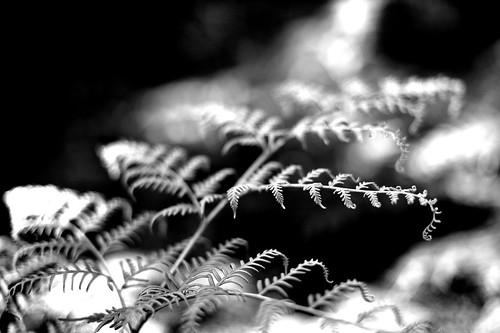 'Bracken - delicate in bw' | by bne-almost zen