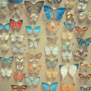 The Butterfly Collection | by _cassia_