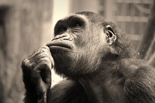 Der Denker / the thinker | by Peonia69