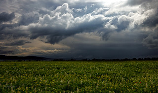 Green field and Equinoctial storm | by Robyn Hooz (away)