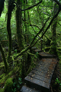 Creepy Crawly Track (In the Great Wilderness of Tasmania) | by Eddy.H