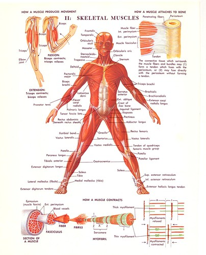 5621623177_b9cb37d3c5 70s medical illustrations scans flickr medical diagram at aneh.co