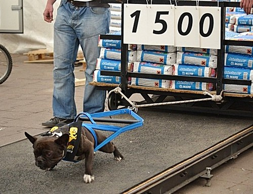 Dogs That Pull Sleds Name
