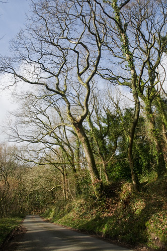 Country Lane - The Luxulyan Valley, Near St Austell, Mid Cornwall | by magiccornwall