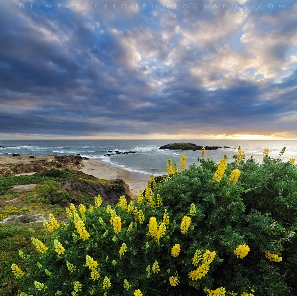 California san mateo county pescadero -  Springtime In Pescadero San Mateo Coast California By Jim Patterson Photography