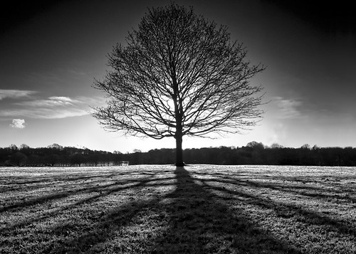 THE TREE - [Explored] | by Pogobone