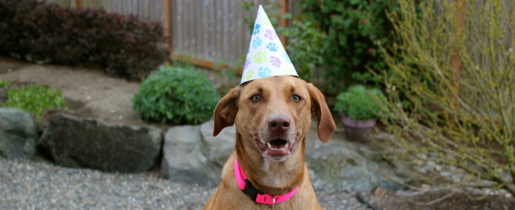 Dog Wearing Happy Birthday Party Hat Zoo