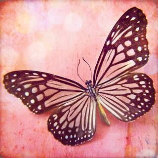 Shimmer Butterfly Fine Art Photograph | by MarascaPhotography