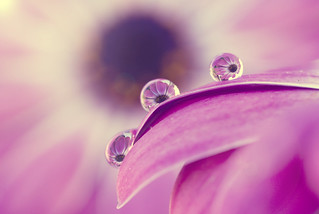 multiple drops | by Arianna ♥__♥