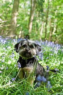 In the Bluebells | by Kirstyxo