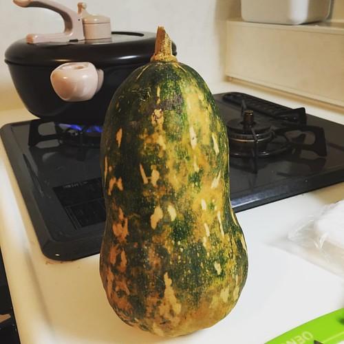 ひょうたんみたいな島かぼちゃ