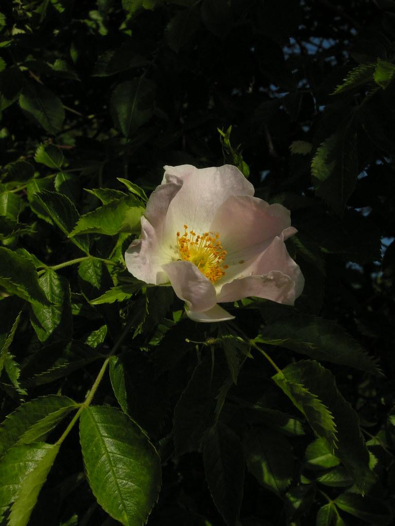 Prüfungsrelevante Pflanzen R-V