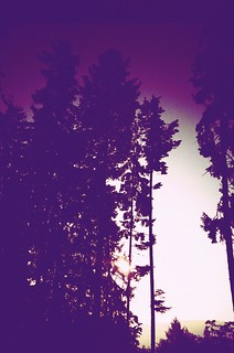 purple woods | LC-A+ | by lomostream