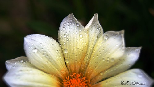 Flower 6 | by Alshmemri Photography's