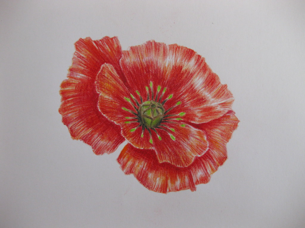Flower Tattoo Flash No Outline Practice Poppy Flower And Flickr