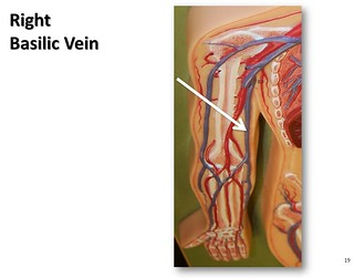 right basilic vein - the anatomy of the veins visual guide… | flickr, Human Body