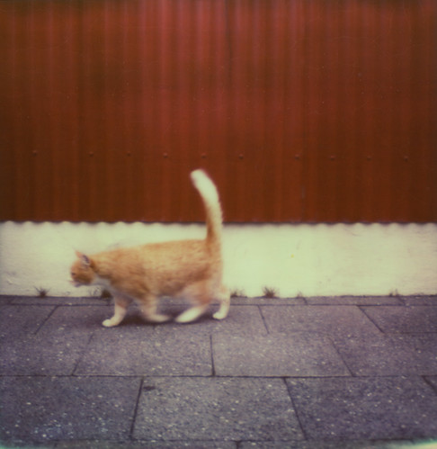 Dynamism of a Cat in Reykjavík | by Kim Smith-Miller