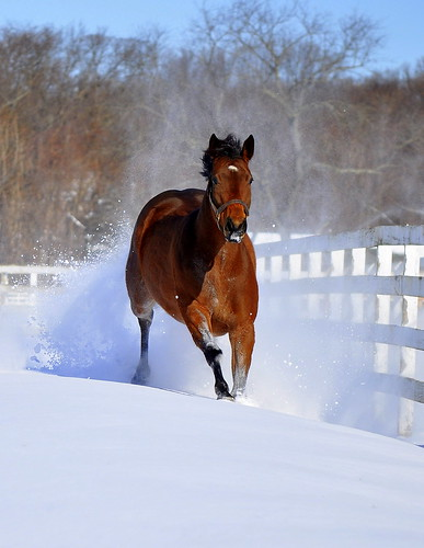 Thoroughbred in Snow | by QuinnPhoto