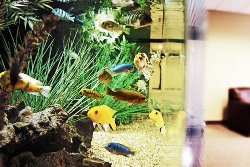 Fish tank | by Fellowship of the Rich