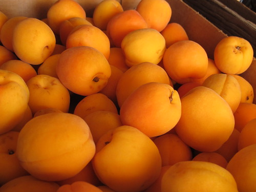 Local Apricots | by Eden Hensley Silverstein