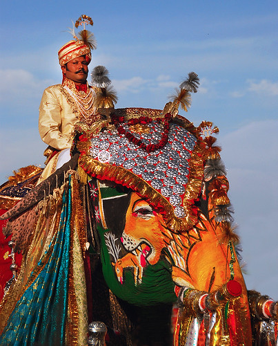 winning elephant in the Jaipur Elephant Festival